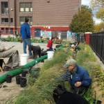 lea elementary rain garden