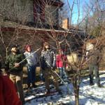 GT pruning 2015
