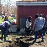 Volunteers preparing the soil for orchard planting at Penn Alexander School in West Philly.