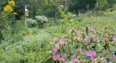 Cobbs Creek pollinator garden