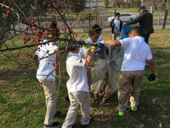 School kids in white tops and khaki pants lift a bare-root crab apple tree. Its mostly bare branches have red fruit from the prior fall.