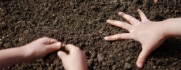 The hands of two people reach into a bed of soil. One hand has its five fingers spread wide, while the hands of the other person are scooping up a handful of soil.