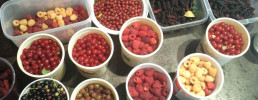 An assortment of berries and other small fruit sits on the floor in plastic tubs. The fruit ranges in color, from white/yellow, different shades of red, to deep purple.