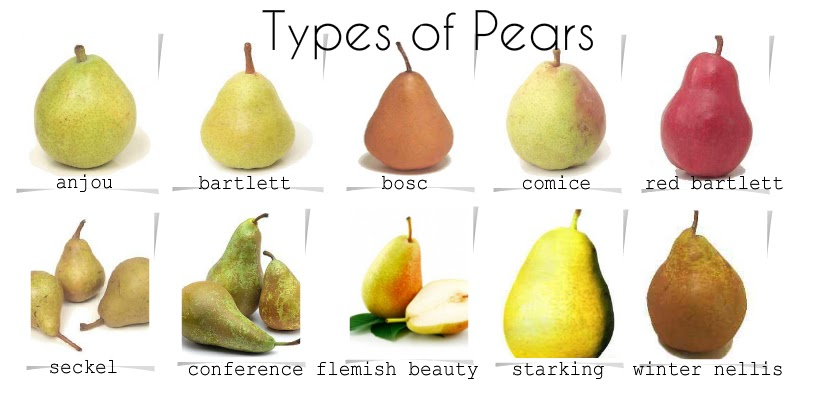 Asian pear harvest