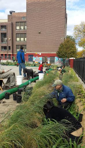 Capturing and Conserving Water with Stormwater Catchments and Edible Rain Gardens
