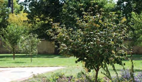 Orchard Partner: Overbrook School for the Blind – Philadelphia ...