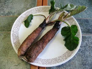 Burdock's long, brown taproot is highly nutritious and traditionally used in Asian cooking.