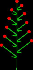 Juneberry 3