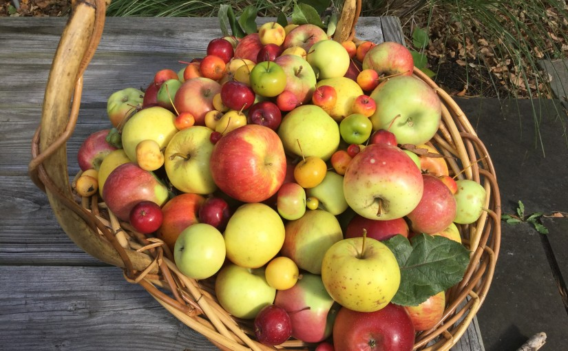 The World of Apples: A Tour of The USDA Apple Collection