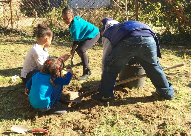 Volunteers planting at POP's newest orchard, Monumental Baptist Church, in fall 2017.