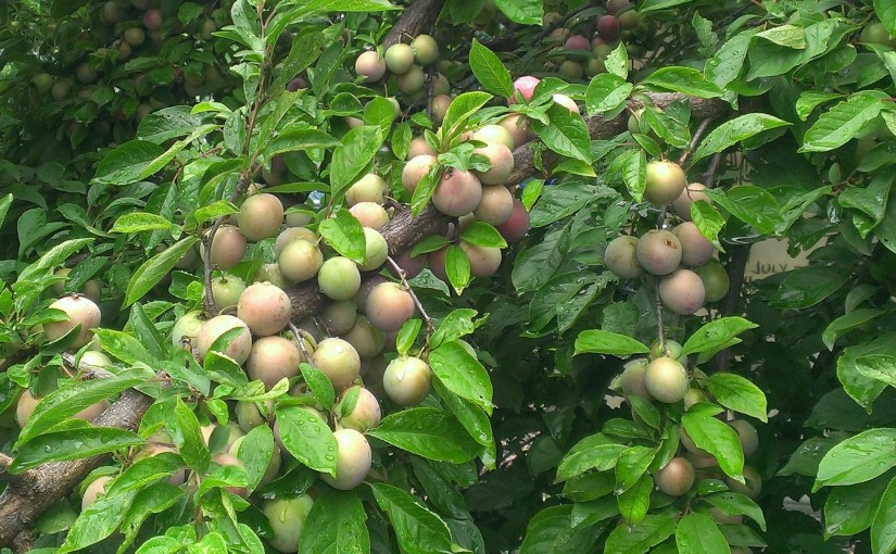 How did we do last year? POP's 2016 Orchard Survey Summary