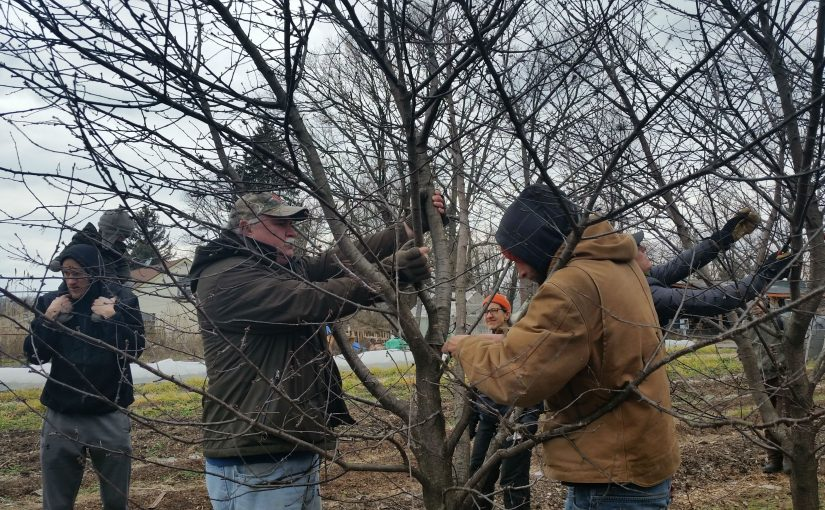 Winter Pruning: Workshop Review & Pruning Guide