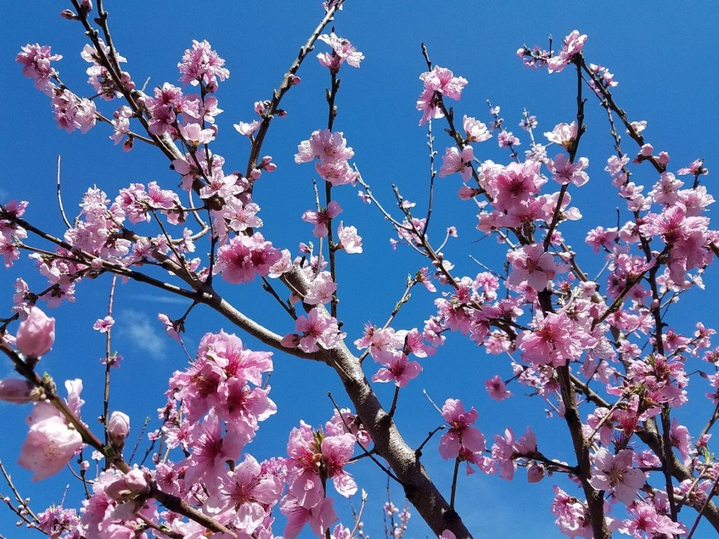 Early Spring Orchard Care Tips Ndash Philadelphia Project