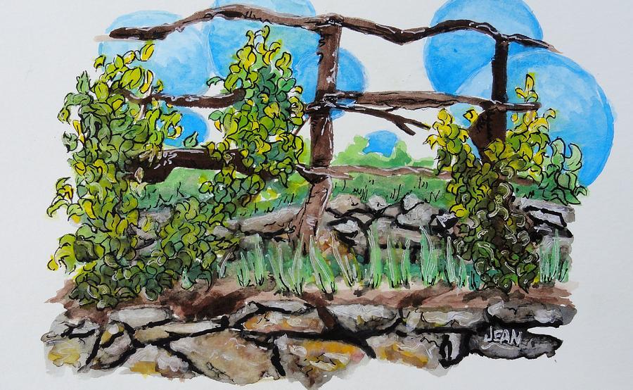 grape vines – Philadelphia Orchard Project