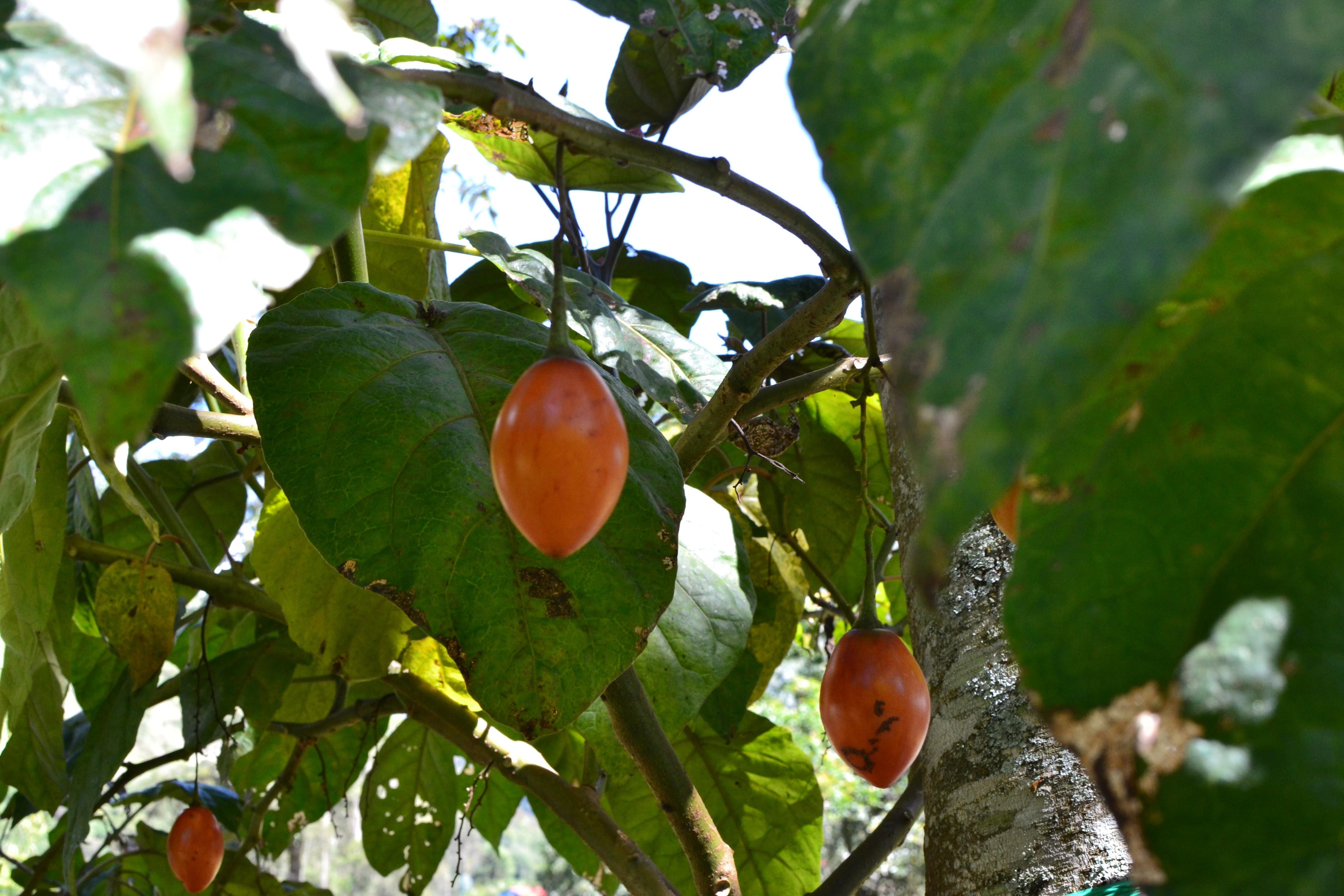 philadelphia orchard project