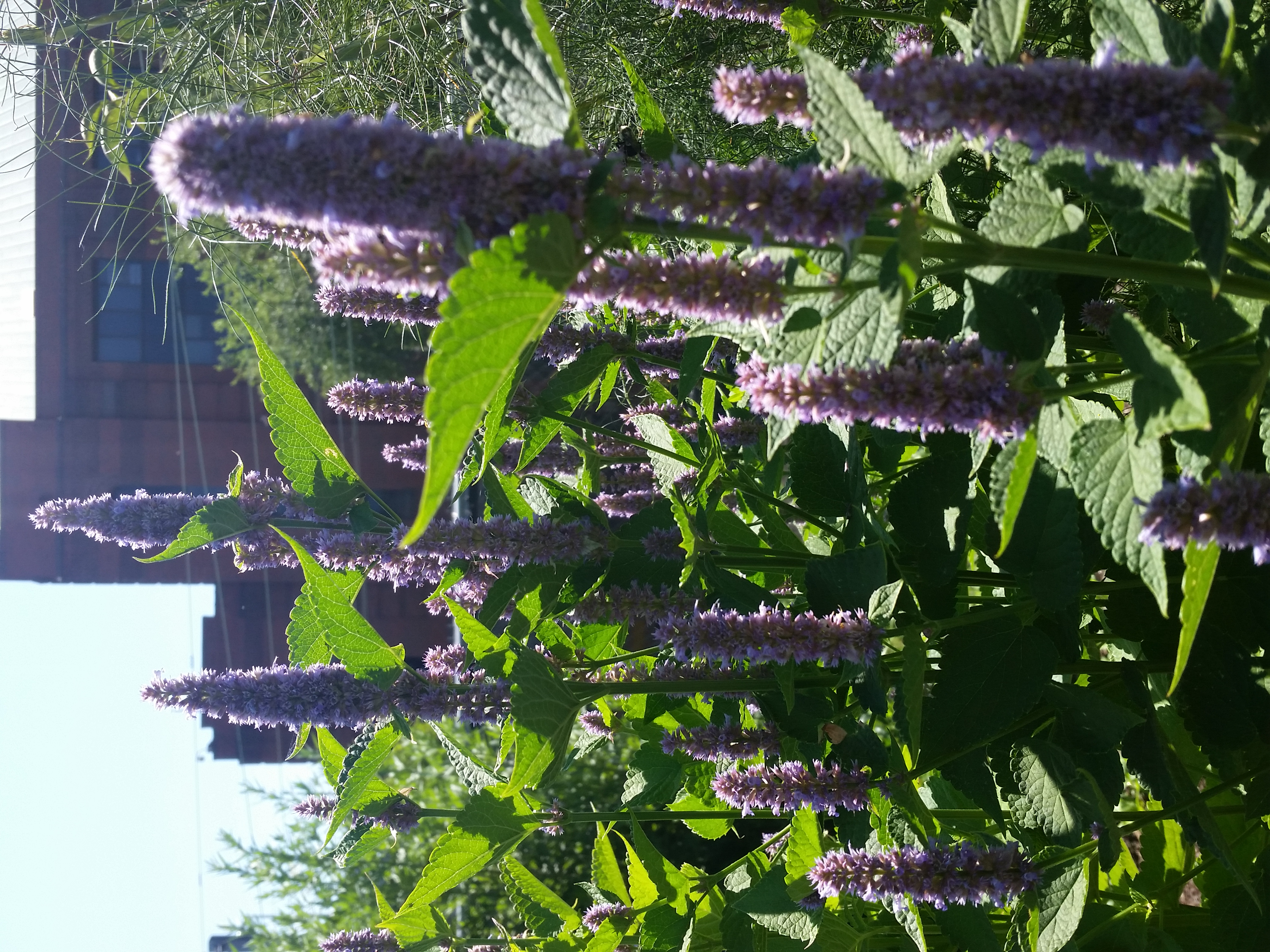 guest post why pollinator gardens matter – philadelphia orchard