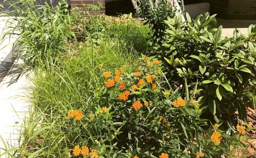 Why Pollinator Gardens Matter
