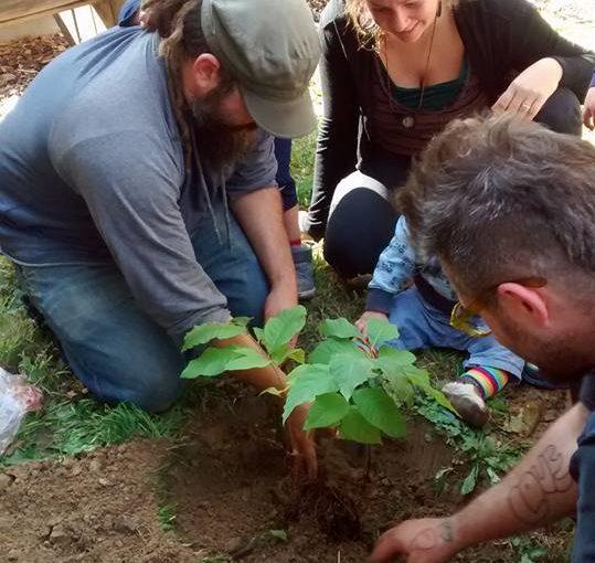 POP Orchard Partner Feature: 5000 Cedars & Jewish Farm School