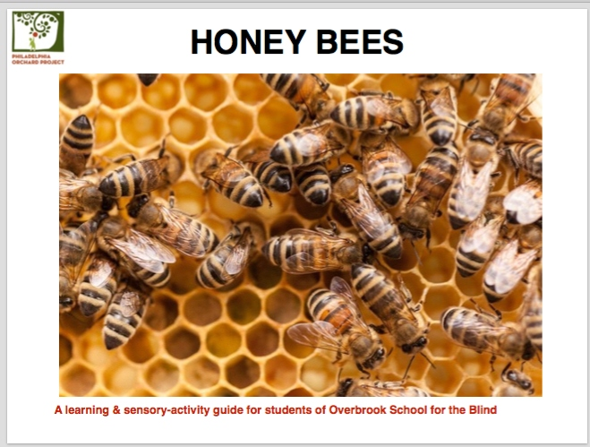 Honoring Roseann McLaughlin and GrowAbility Honeybee Sensory Lesson Book (PDF Download)