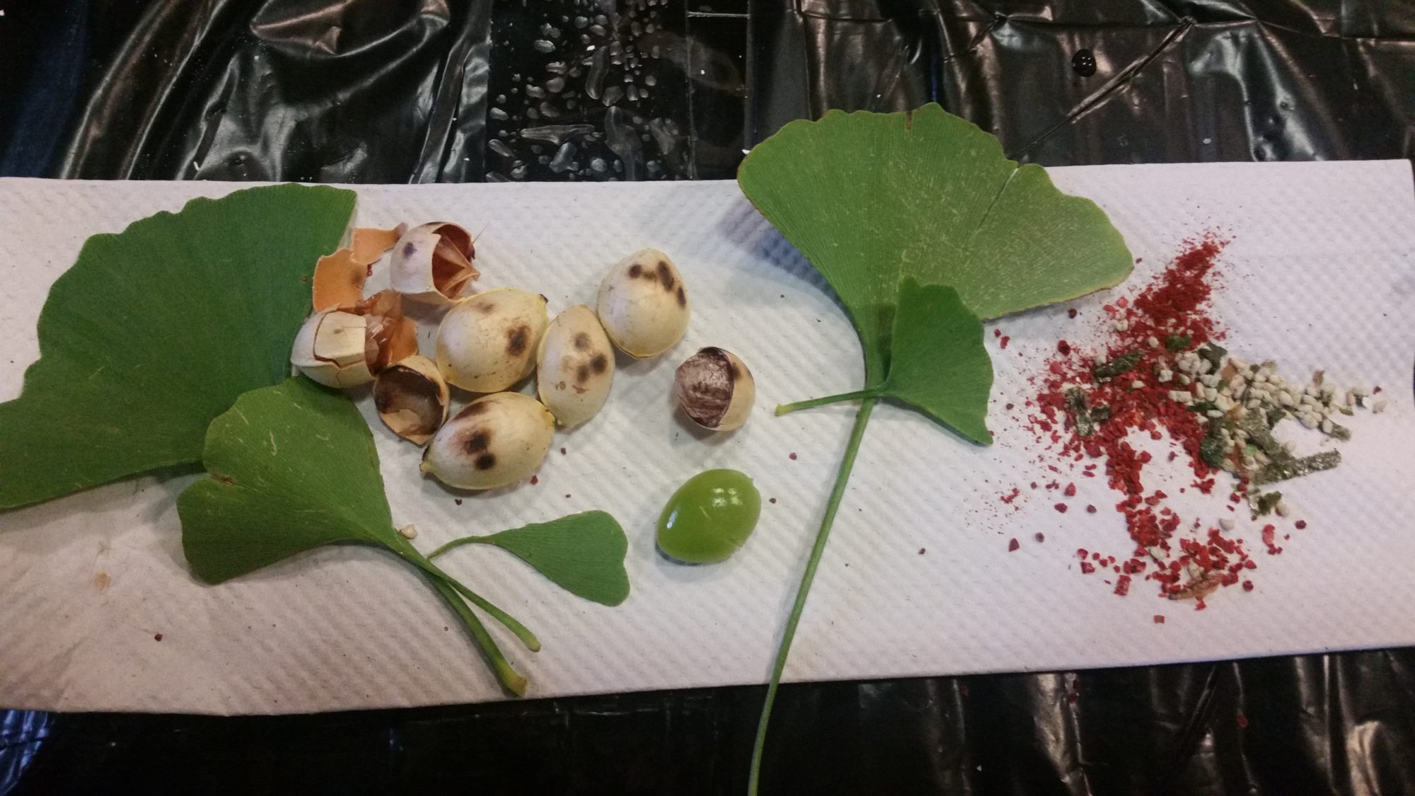 A paper towel containing a spread of Ginkgo leaves and nuts, with additional spices on display