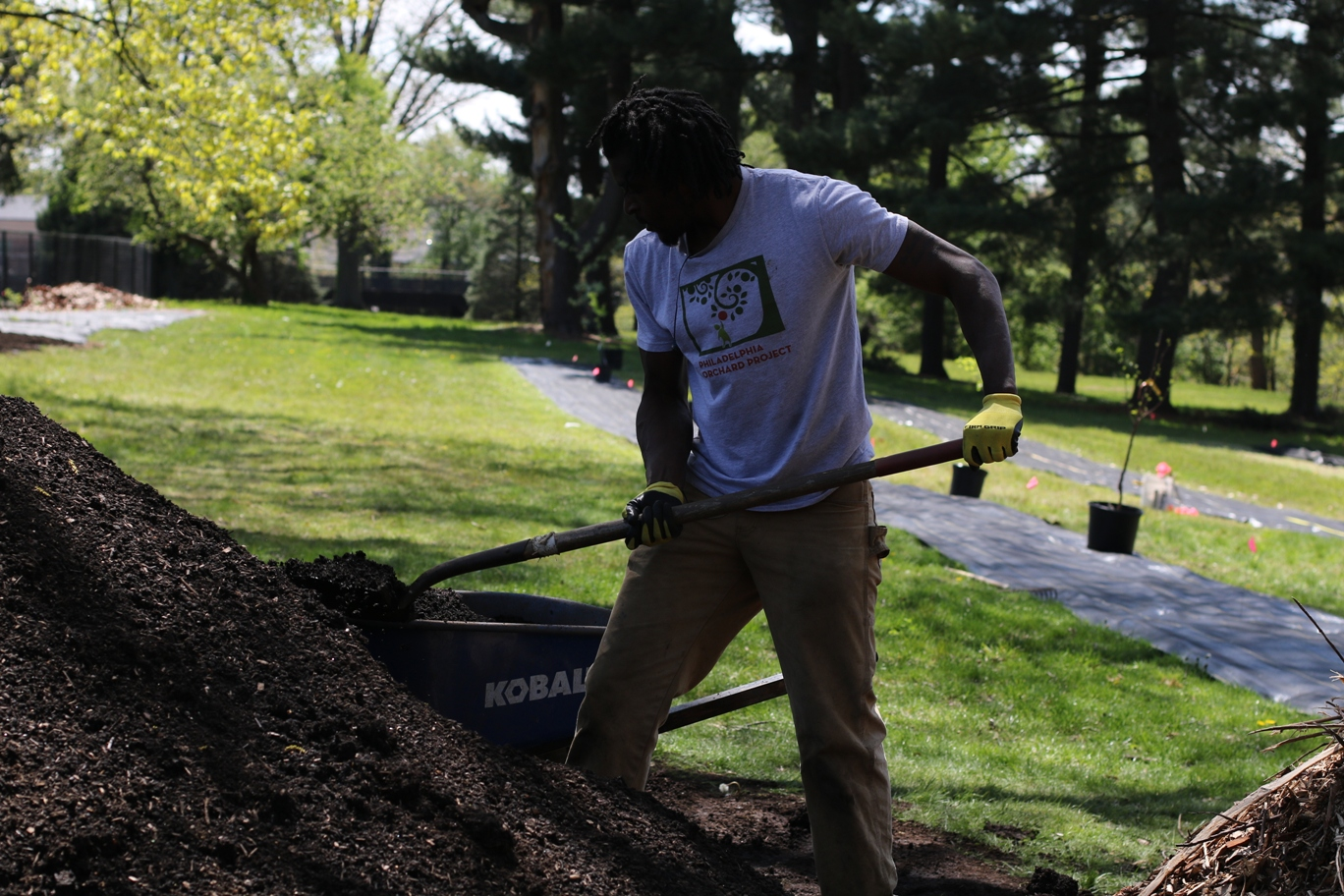 Orchard Director Alkebu-Lan Marcus shovels compost into a wheelbarrow.