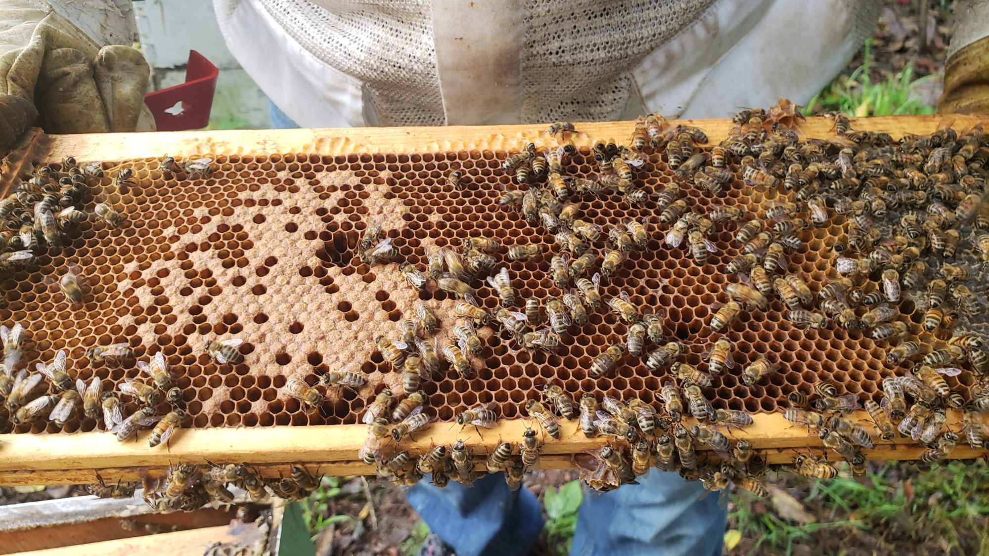 WEC staff holding one of the components of their active bee hive