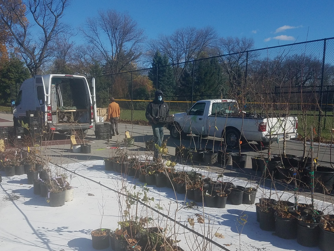 Staff and volunteers unload plants at POP's new edible plant nursery at The Woodlands in November 2020.